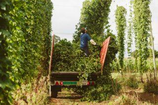 Jornada formativa sobre cultivo de lúpulo