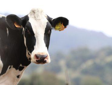 ¿Cuál es el destino del dinero pagado a la Interprofesional Láctea?
