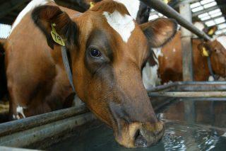 """""""Tratar el agua para las vacas no es un gasto, es una inversión muy rentable para el ganadero"""""""