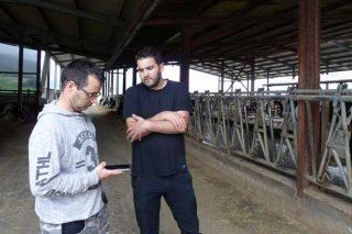 Uniform y Allflex Livestock Intelligence mejoran la gestión de los rebaños de vacuno de leche integrando sus programas