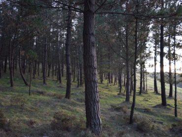 La Xunta subastará en septiembre 61 lotes de madera de pino por más de 2,5 millones de euros