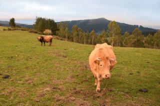 Cursos de incorporación a la ganadería de carne