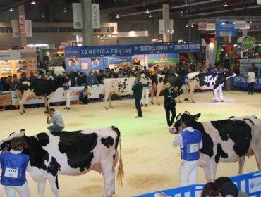 Programa del Concurso Autonómico de ganado frisón, que tendrá lugar en septiembre en Feiradeza