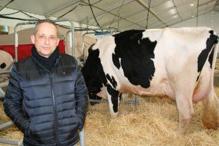 """""""Es prácticamente imposible en España que llegue al mercado una leche con restos de antibióticos"""""""