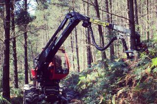 Hitraf, puntal de la modernización tecnológica forestal