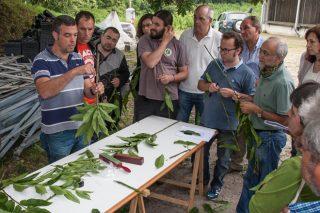 """""""Necesitábamos un distintivo para la planta ornamental gallega, muy demandada en países como Alemania"""""""