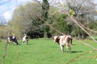 ¿Es el pastoreo una alternativa para las ganaderías actuales en Galicia?