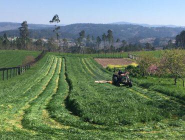Ganadería, agricultura y sector forestal, declaradas actividades esenciales