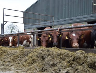 """""""La intensificación sostenible de la ganadería brinda una oportunidad de mitigar el cambio climático"""""""