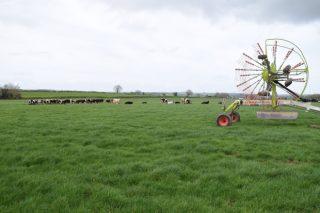 Irlanda: Algunas claves de por qué es una potencia internacional en el sector lácteo