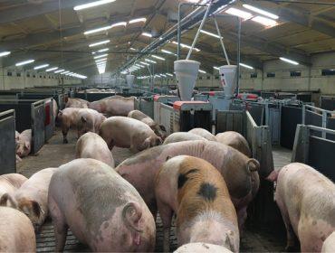 Perspectivas para el sector porcino en los próximos meses