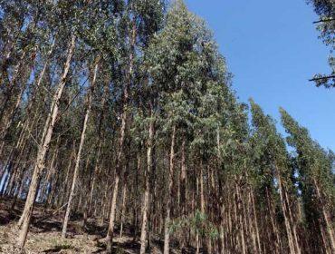 Charla sobre cómo mejorar la productividad de las plantaciones forestales de eucalipto
