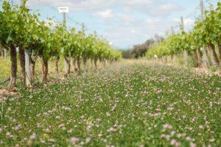 Curso sobre viticultura sostenible en Monforte de Lemos