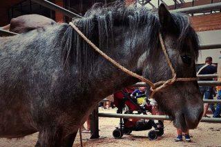 Los caballos para vida alcanzan un precio medio de 1.275 euros en la Feria Caballar de la Ascensión