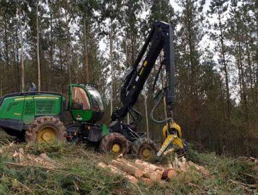 La cadena de la madera reduce actividad por la bajada de la demanda