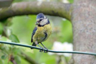Aves aliadas en el control de plagas: el caso del manzano