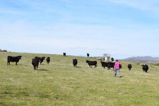 Los ganaderos y agricultores podrán cobrar la PAC 2020 a partir del 16 de octubre