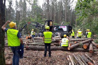 La Xunta lanza una nueva convocatoria de ayudas a la formación y divulgación de la industria forestal