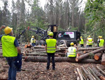 El sector forestal gallego en cifras