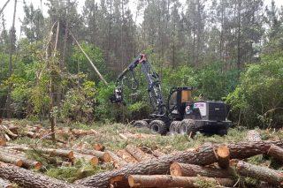 Organizaciones silvícolas y de la madera defienden el consenso alcanzado en el Plan Forestal