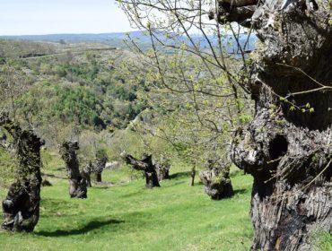 La Xunta invierte 135.000 euros en el Centro de Desarrollo Agroforestal de Riós