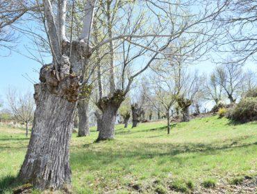 Jornada formativa en As Neves sobre aprovechamiento del castaño
