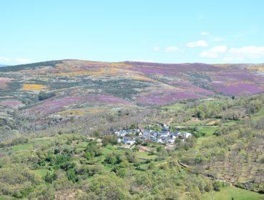 Esta es la ley que aspira a recuperar la tierra del abandono en Galicia