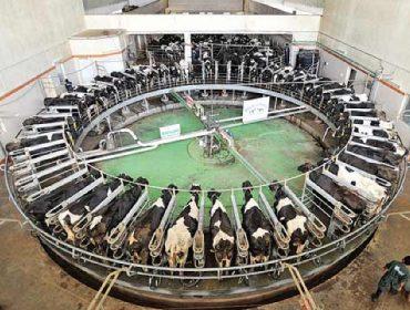 Los ganaderos españoles pierden un céntimo en cada litro de leche que producen