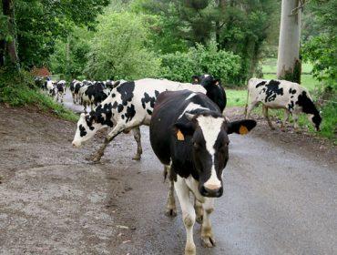 Jornada sobre la pegada de carbono en ganaderías de producción ecológica