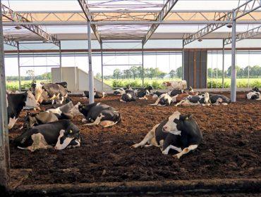 Granxa Lagendijh, en Holanda, libertad para las vacas y manejo automatizado