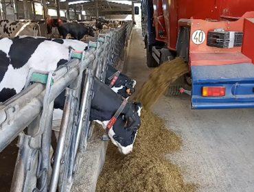 ¿Qué hay de verdad en los mitos sobre la alimentación de las vacas?