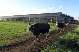 Menos vacas pero más productivas: la tendencia en la mayoría de países de la UE tras el final de las cuotas