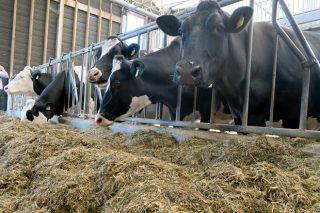 Herramientas para que los precios de la leche no queden fuera de mercado en Galicia