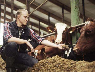 Estas son las industrias europeas que más pagan por la leche