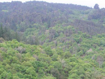 """Charla sobre «Bosques, biodiversidad y COVID-19"""""""