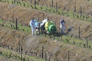 Estrategias que siguen en Portugal para reducir el uso de fitosanitarios en el viñedo