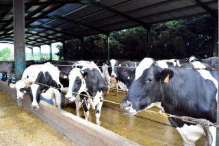 Repunte estacional del precio de la leche en otoño