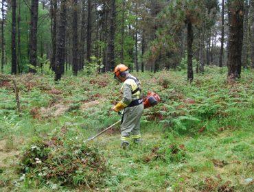 La Xunta autoriza los desbroces y los trabajos de mantenimiento y limpieza en los montes