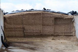 Micotoxinas: ¿cómo reducir el impacto que pueden causar en la alimentación del ganado?