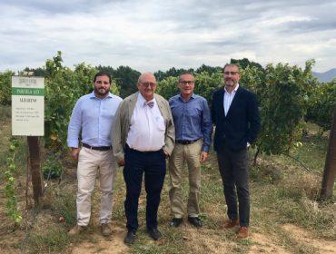 Nuevos proyectos de Bodegas Terras Gauda para lograr vinos más ecológicos