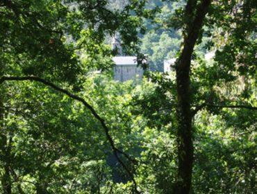 PEFC organiza un foro online sobre «Los bosques, sus productos y servicios en el mundo post-Covid»