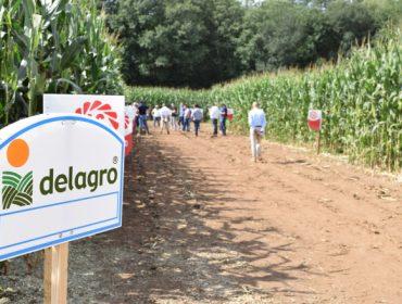 Variedades más resistentes y digestibles y nuevos tipos de picado marcarán el cultivo del maíz forrajero