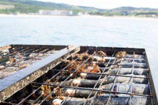 Bajo el mar, fermentado en granito o en barro: Nuevas tendencias en la elaboración del vino