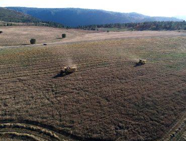 Coren cosecha sus primeras 50 hectáreas de cereal ecológico en Ferreira de Pantón