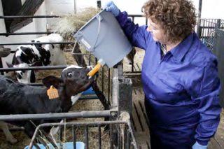 Buenas prácticas laborales para las mujeres trabajadoras del campo