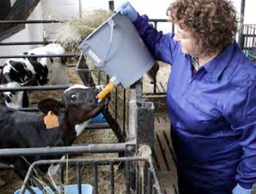 Día Mundial de la Mujer Rural: Sólo el 30% son titulares de granjas