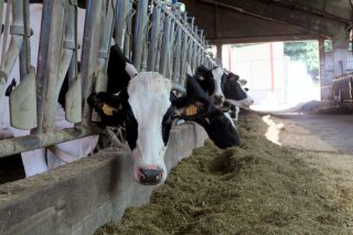 El precio de la leche en el campo mantiene la tendencia a la baja