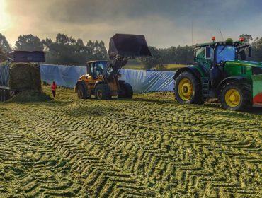 Vídeo e imágenes del ensilado del maíz en Galicia 2019