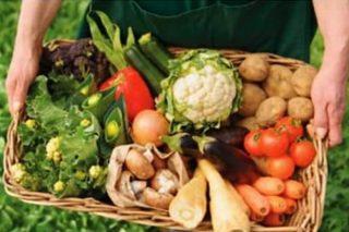 Curso online gratuíto de agricultura ecológica