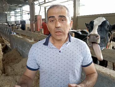 ¿Cómo se vive la vida Lely?: Mejoras en el manejo del ganado gracias al robot